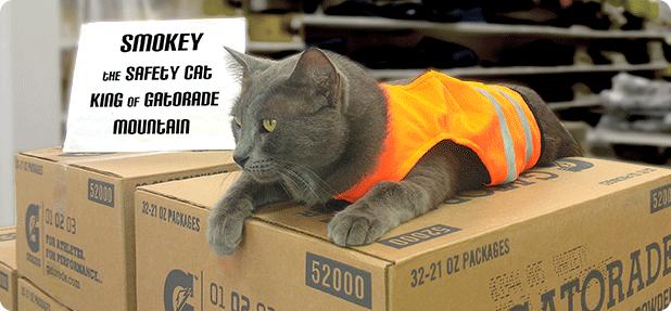 Direct Safety's King Gatorade Cat