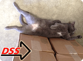 Direct Safety Warehouse Cat